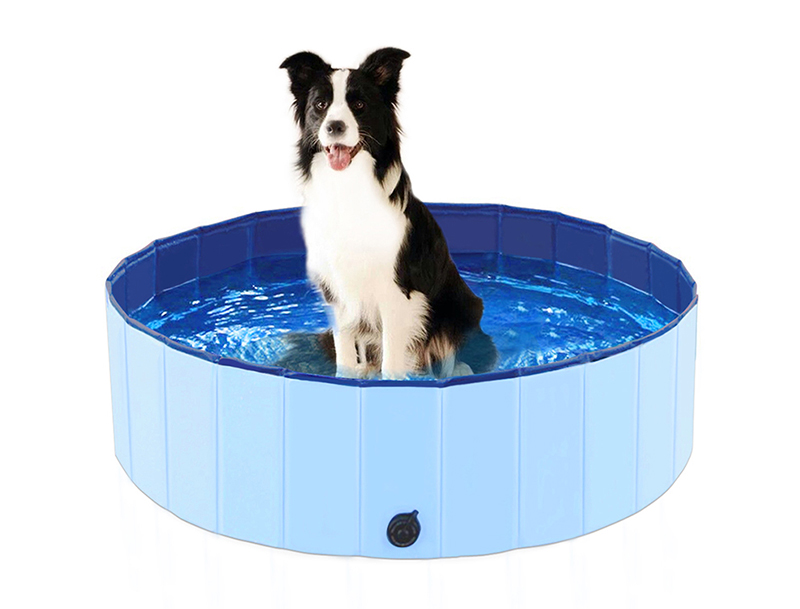 Dog Padding Pool